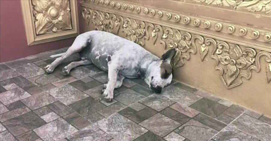 Sheltered Dog Waits to be Adopted (Photo courtesy of Creative Commons).